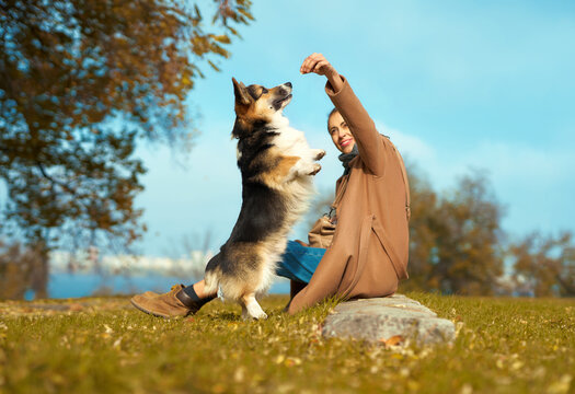 Girl with dog on grass at autumn park, training Welsh Corgi dog outdoors, pet standing on hind legs ad asking food. autumn concept, friendship dog and human.