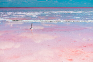 Pink salt lake and the blue sky with clouds reflected in the water surface. Sasyk-Sivash pink salt lake in Crimea. Summer landscape
