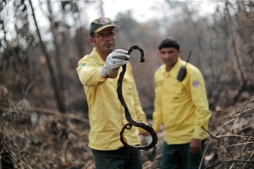 A Brazilian Institute for the Environment and Renewable Natural Resources (IBAMA) fire brigade member holds a dead snake during an attempt to control hot points in a tract of the Amazon jungle near Apui