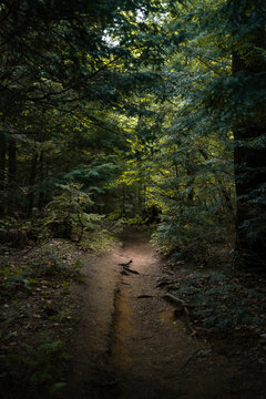 Natural landscape with narrow trail going through lush green bushes and tall trees in Algonquin Provincial Park in Canada