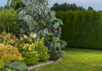 Professional Gardener Checking Garden Trees Health