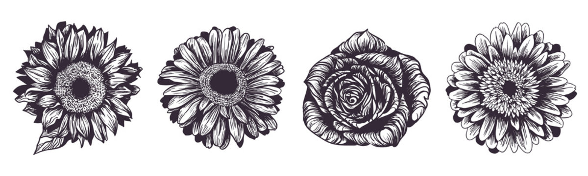 Vintage hand drawn flowers set isolated on white background. Sunflower, rose and gerbera garden plants. Vector illustration. Ink sketch for wedding design