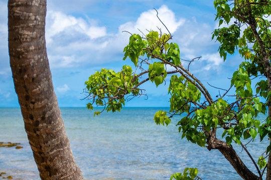Sous les cocotiers, vue sur l'horizon