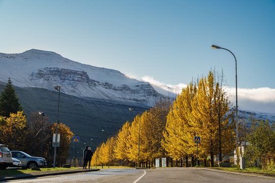 The autumn view of Seydisfjordur with rows after rows of foliage beside the bending road leading to the snow cape mountain