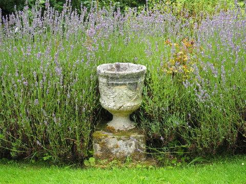 stone urn in lavender bed
