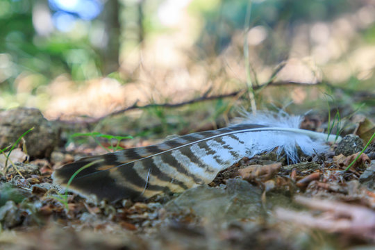 Bird feather on the ground. Animals elements concept