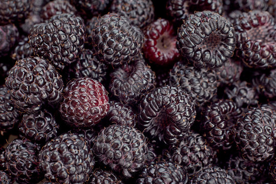 Cumberland raspberry-blackberry