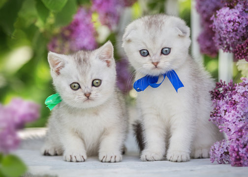 Two little fluffy kittens sit on a background of flowers