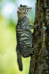 Kitten climbs up a tree