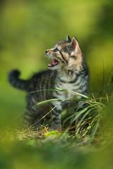 Kitten standing in a meadow