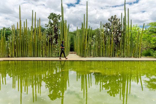 Tourist walking through a dense cacti garden, Mexico