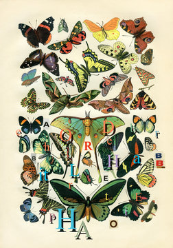 butterflies and letters retro style collage