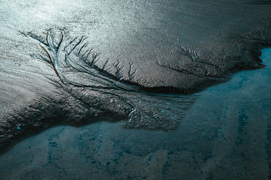 Close up of treelike shapes curved in dark sand by the ocean