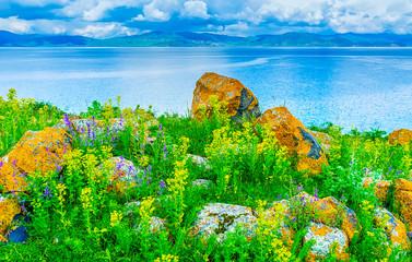 The boulders among the wildflowers, Sevan Lake, Armenia
