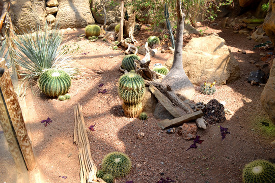 Desert Plants - Zoo Exhibit