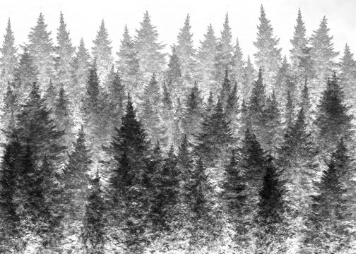 Illustration of a foggy forest for backgrounds