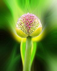 Trillium flower with twirl effect applied