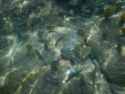 タイ ナンユアン島の魚