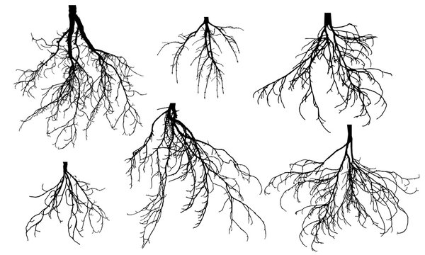 Set of bare roots of different trees. Vector illustration.