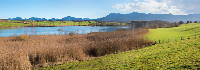 moor lake riegsee with reed grass, wide bavarian landscape in autumn, with mountain view