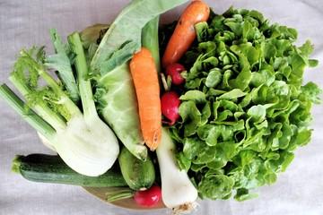 Frische Ernte: Gemüse in Bio-Qualität