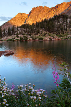 The devils castle reflecting in cecret lake with fireweed flowers in the foreground, Albion basin Utah.