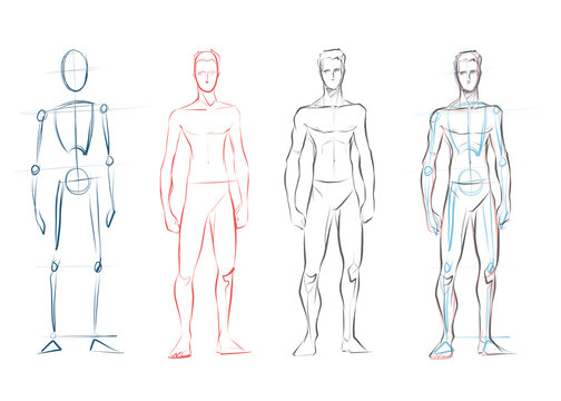 Vector male human body drawing sketches