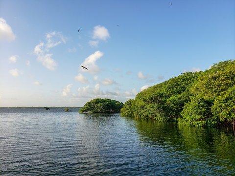 îlets de palétuviers, oiseaux, Guadeloupe