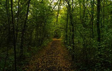 camino bosque verde (horizontal)
