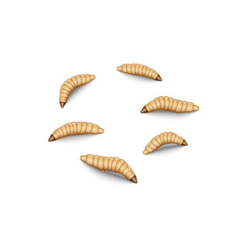 Fly maggot set isolated on white, 3d realistic vector illustration, crawling fly larvae bait for fishing