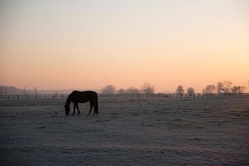 Sylwetka konia na tle zachodzącego słońca