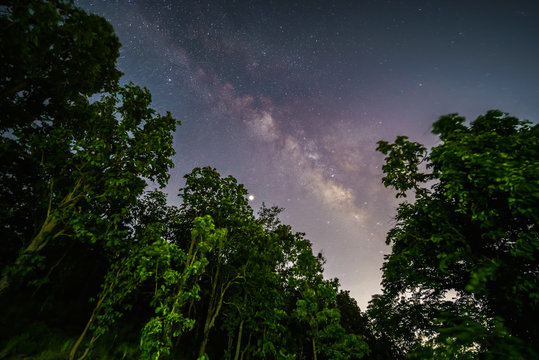 Milky way galaxy with stars and space dust at the starry night in forest. Night landscape with beautiful Milky Way and long speed exposure.