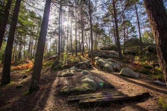 Soleil matinal à travers les arbres en forêt de Fontainebleau