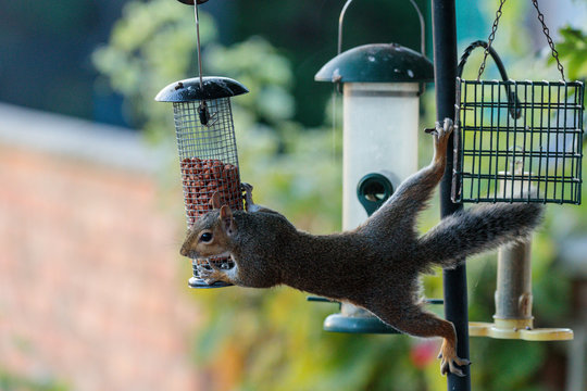 squirrel on a feeder