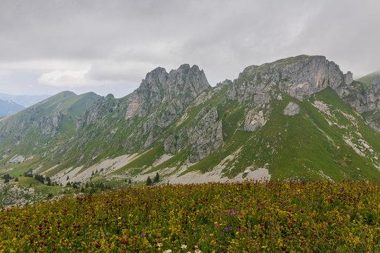 Alpage fleuri aux Cornettes de Bise en haute Savoie