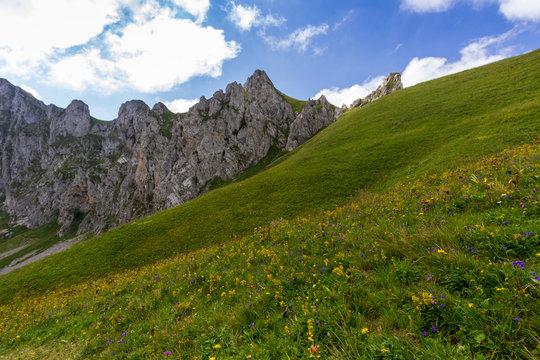 Fleurs jaunes dans les alpages aux Cornettes de Bise en haute Savoie
