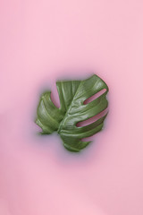 Wall Mural - Summer scene with green monstera leaf in pink milk. Tropical sun and shadows. Minimal nature background.