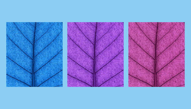 Leaf natural background concept abstract colored 3d rendering