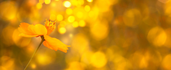 Blurred summer autumn background with yellow flower in sunlight. Beautiful nature scene. Colorful Wide Horizontal floral Wallpaper