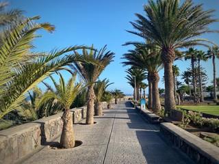 Photo sur Plexiglas Palmier Chemin bordé de palmiers