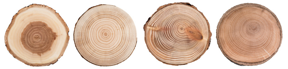Wood slice cross section with tree rings   isolated on whitte background. Set of tree ring slice, stump circular.