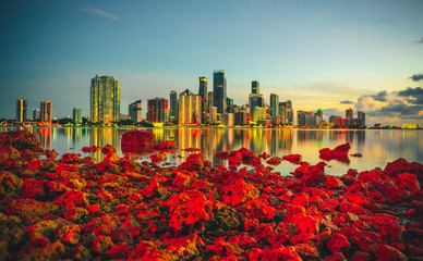 miami florida usa skyline at sunset city downtown beautiful reflection buildings panorama red sea rocks