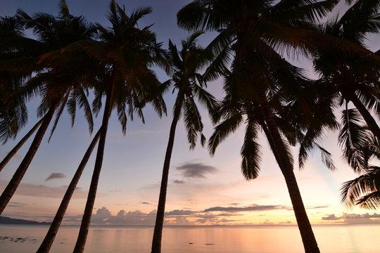 Palm trees at sunset. White beach. Boracay island. Western Visayas. Philippines
