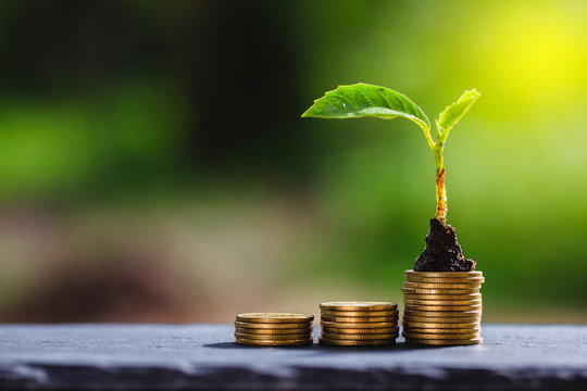 Return on investment concept and saving money Seedling on a blurred natural background