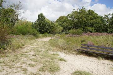 Dune landscape. Sandy path and a wooden bench in the Dutch dunes in North Holland near the tourist village of Bergen. Summer with flowering heather (Calluna vulgaris). August