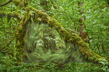Portal vortex in forest under archway of moss covered tree branches