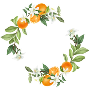 Wreath of hand drawn blooming mandarin tree branches, mandarin flowers and mandarins, isolated illustration on a white background