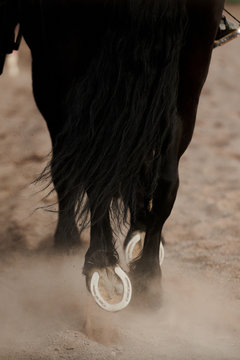 From above of mild steel horseshoes on hooves of black warm blooded mare walking in paddock on sandy surface in daylight