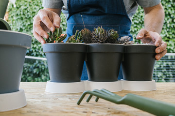 Crop unrecognizable male grower demonstrating collection of potted cacti with pointed leaves while standing near table with garden fork behind lush green bushes
