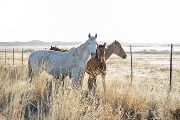 Wild horses next to a road at sunrise